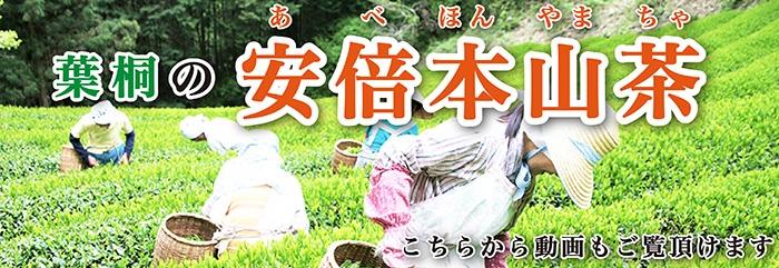 葉桐の安倍本山茶